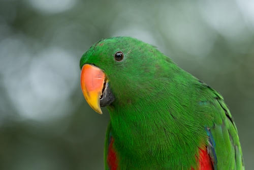 Caring for parrots is a new form of PTSD treatment that is working for some veterans.