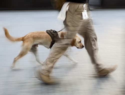 More work being done to connect vets with service animals